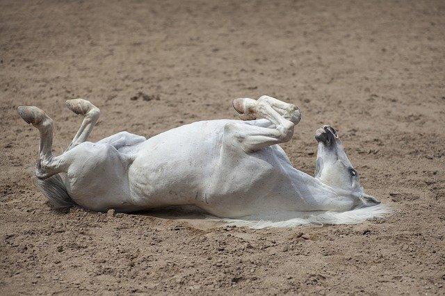 kůň na zádech