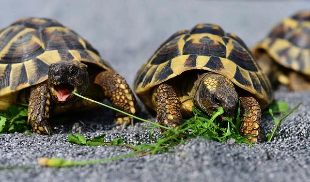 malé želvičky